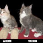 whisper-e-wilburn_OK