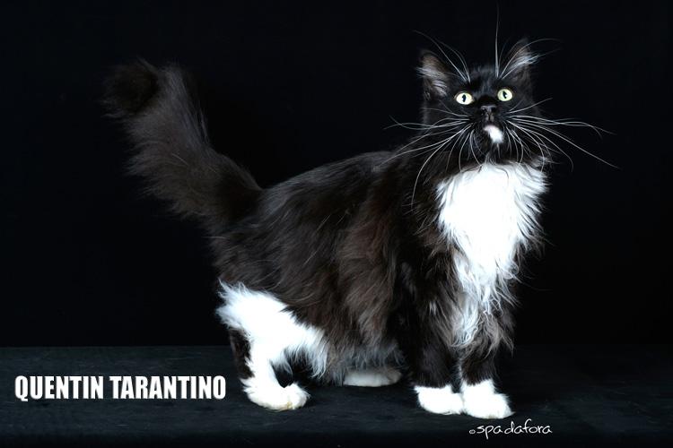 Tarantino1