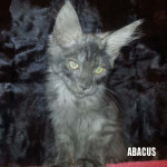 ABACUS2
