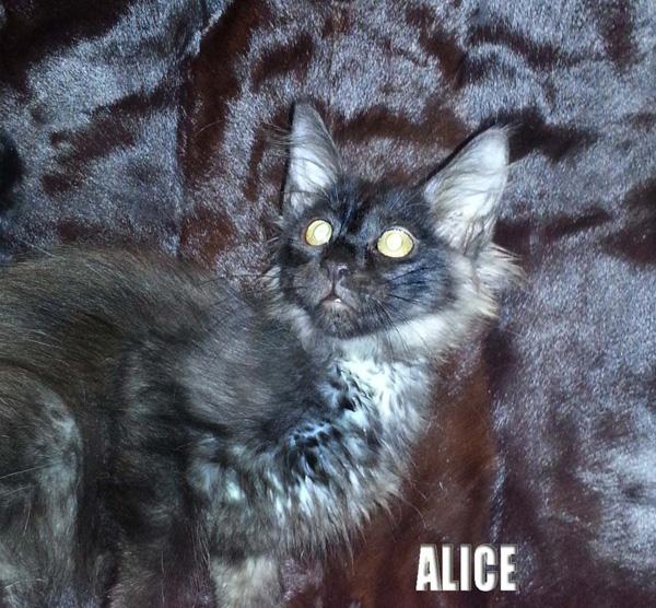 ALICE-